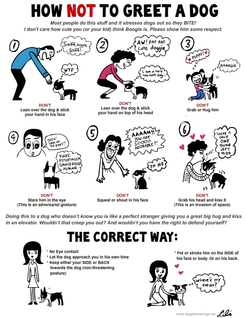 Interesting pictorial depicting the way to greet dogs