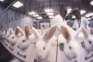 rabbits-animal-testing