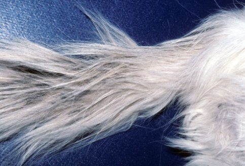 clumpy fur stud tail cat