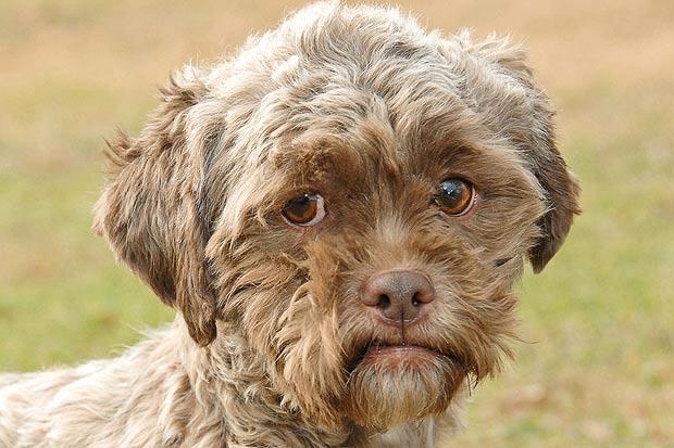 sad face dog
