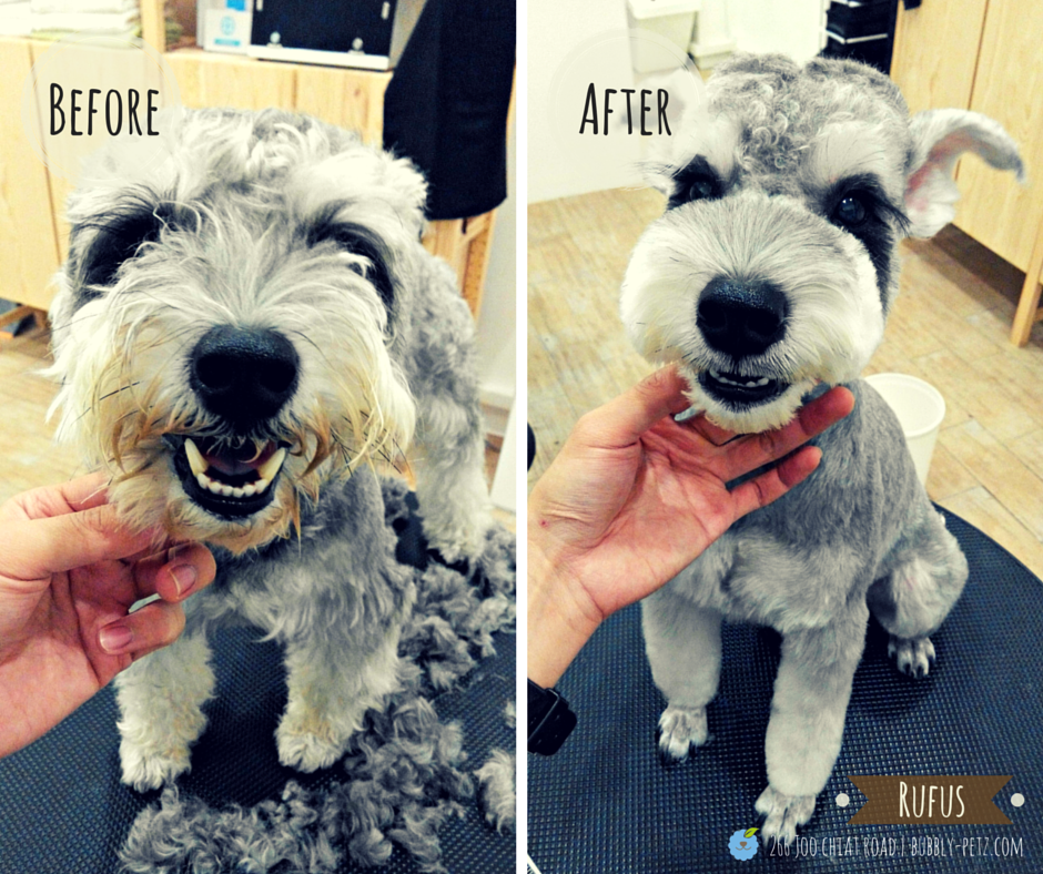Summer Time Dog Grooming Styles