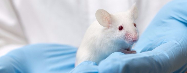 animal-testing-medical-research